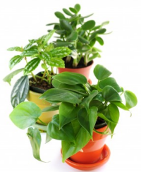 Image of House Plants create humidity - Mold Solutions NW