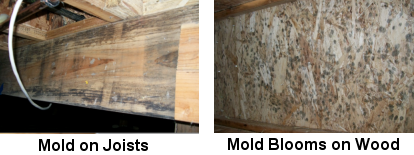 Image of Mold on Joists and Walls - Mold Solutions NW