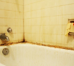 Bathroom Mold - Mold Solutions NW
