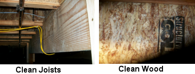 Image of Free from mold - Mold Solutions NW