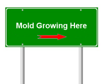 Signs of Mold - Mold Solutions NW